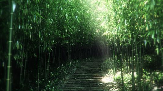 路径,性质,路径,丛林,艺术,竹子