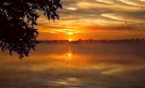 日落,天空,湖,树,光滑,云,剪影,美女