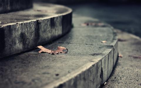 心情,浪漫,宏,叶,秋,壁纸,步骤,楼梯,街道,街道,公园,建筑,建筑,土地,地板