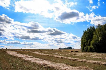 夏天,田地,干草,稻草,斜面,一天,天空,云