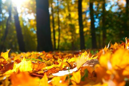 秋天,叶子,森林,树木