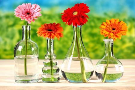 表,瓶,鲜花,非洲菊