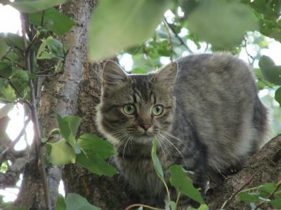 自然,动物,森林,野猫