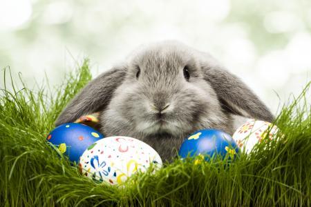 鸡蛋,兔子,复活节