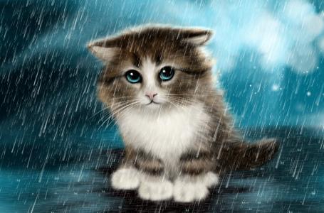 雨,小猫,悲伤