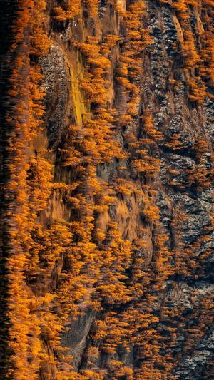 秋季白桦林摄影美景