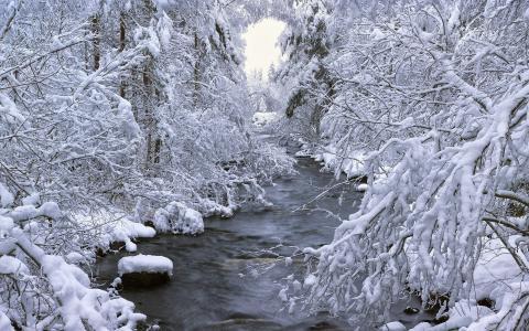 森林,河,瑞典,树,冬天,B__le,雪,达拉纳,瑞典