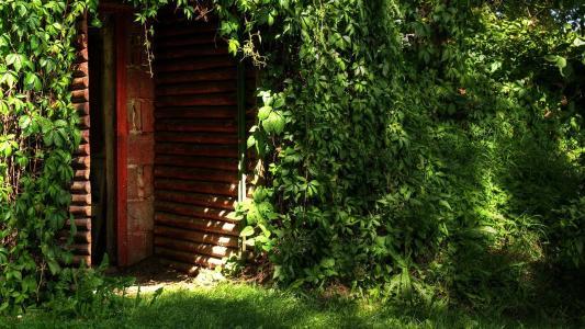 门地窖,绿色丛林,树叶