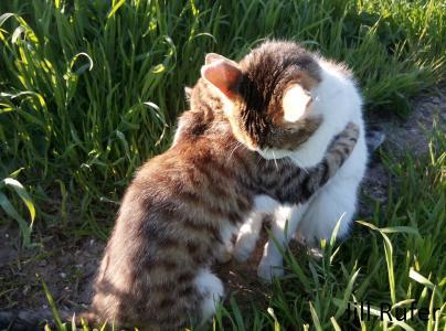 猫,猫,拥抱,爱