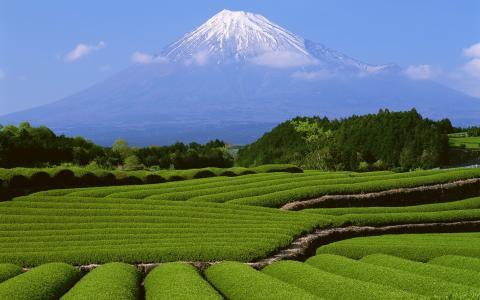 冬季火山,绿色种植园,景观