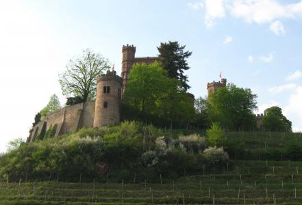 城堡,盛开,斜坡,葡萄园