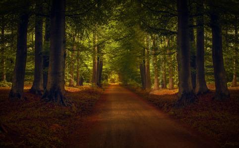 森林,自然,道路