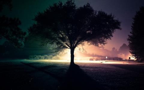 晚上,树,街,路,光