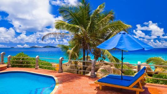 游泳池,躺椅,棕榈,海景