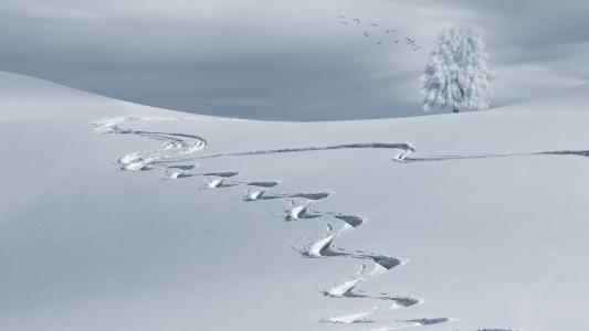 山,雪景,冬天,寒冷,树,景观