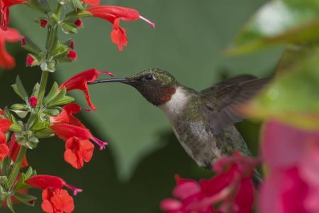 花,鸟,分支机构,树,蜂鸟,飞