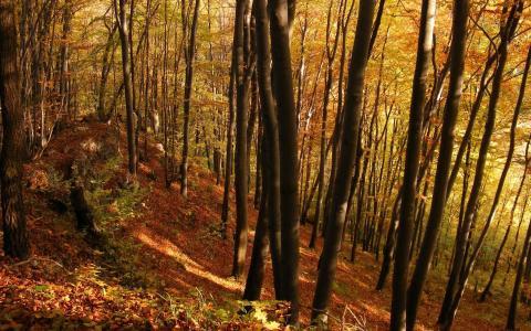 秋天的树林,树木,年轻的森林,秋天