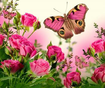 鲜花,玫瑰,蝴蝶,美丽
