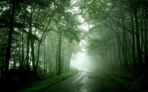 雾,路,湿,雨后,转,树