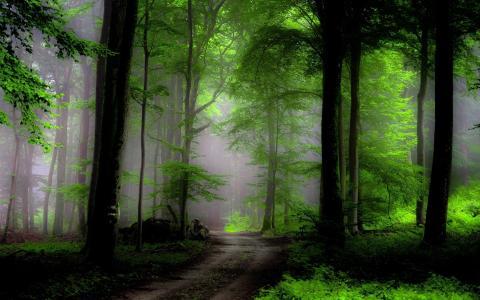 森林,道路,性质