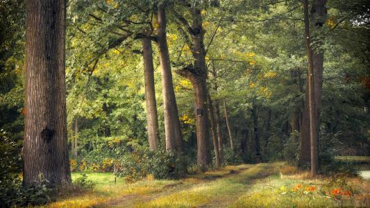 通往深处的森林小道