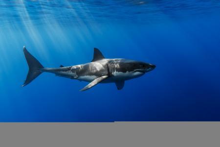 鲨鱼,水,光线