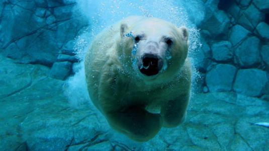 在水之下的照片,白色小熊,冰块