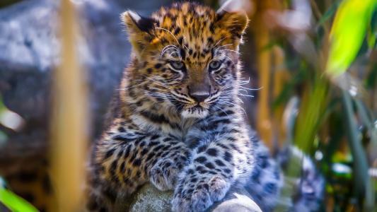 宝贝,豹子