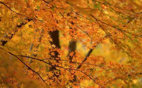树枝,小叶子,黄色