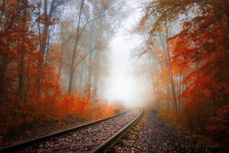 秋天,铁路,树木,雾,怀旧之情,阴霾,叶子,秋天的颜色,Zanfoar