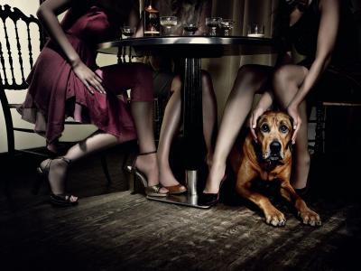 表,餐厅,女孩,狗,腿,秘密,秘密