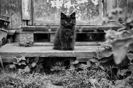 壁纸,动物,小猫