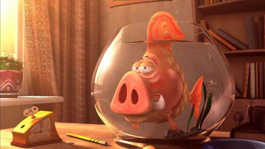 鱼,水族馆,独特,大鼻子