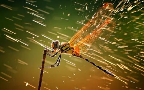 蜻蜓,雨,风