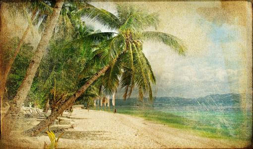 热带,棕榈树,海滩,性质