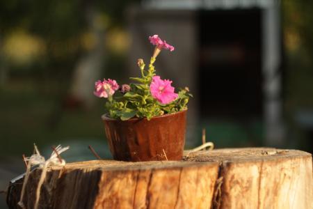 夏天,鲜花,性质