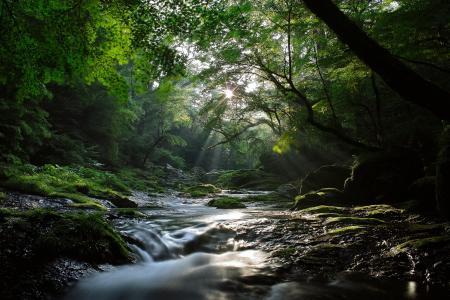 森林,枫树,太阳,性质,河,射线,流,光