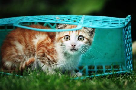 猫咪,包,我会走出去,只是非常害怕