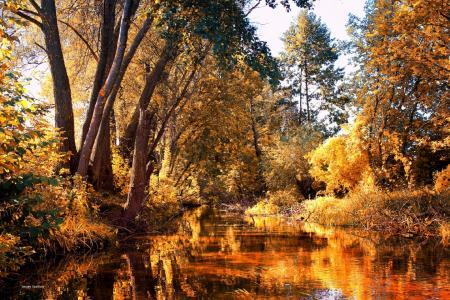 森林,金叶,河,反射,秋天,serg yashchikov