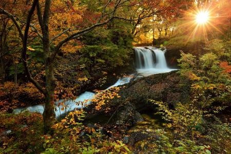 自然,秋天,树,叶子,森林,河,水,瀑布