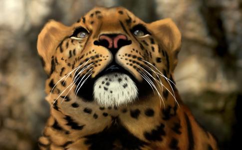 豹,猫,捕食者,3D,Photoshop