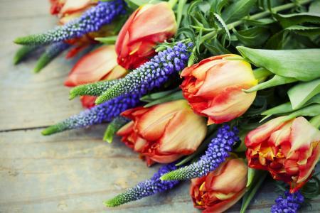 板,花,郁金香,羽扇豆