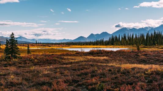 阿拉斯加,河,草,性质