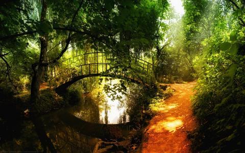 森林,林间空地,太阳