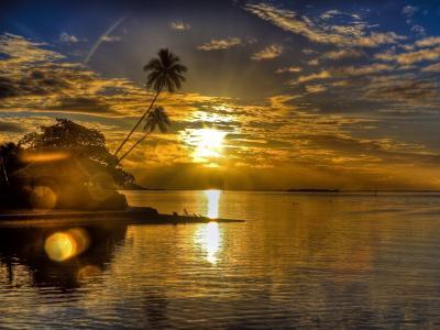 平房,手掌,岸,景观,海,晚上,太阳,日落,眩光,云