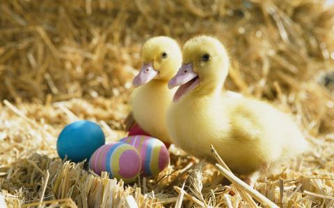 复活节,鸡蛋,鸡肉