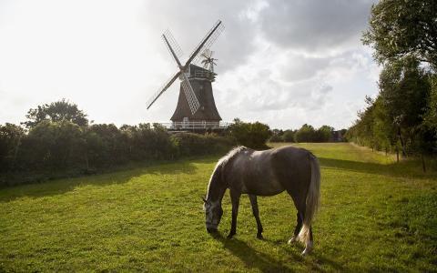 马,性质,磨,草,树木