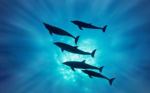 剪影,海豚,光线