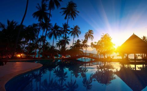 度假村,棕榈树,游泳池,美丽,热带地区