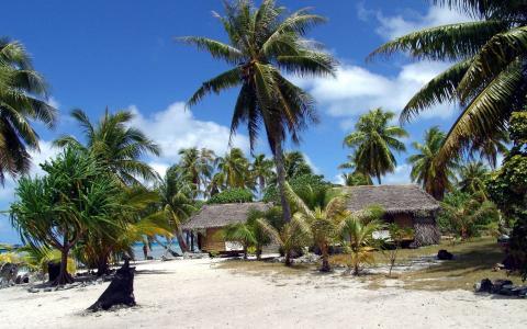 法属波利尼西亚,棕榈树,沙滩高清